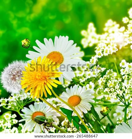 summer landscape. Wildflowers daisies - stock photo