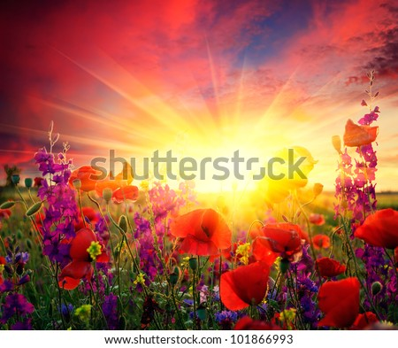 Summer landscape with a field of red poppies blooming - stock photo