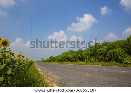 Summer landscape with a field of sunflower - stock photo