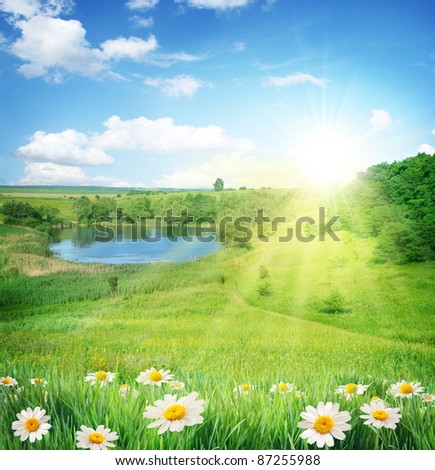 Summer landscape with a lake. In the foreground - chamomile. Sky with bright sun and clouds. - stock photo