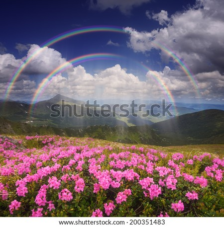 Summer landscape with a rain and a rainbow. Glade of pink flowers in the mountains - stock photo