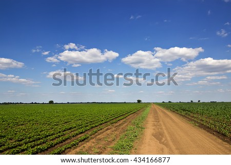 Summer landscape with country road and field of Soy, Corn Field Dirt road in a field. - stock photo