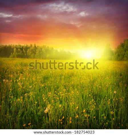 Summer landscape with dandelion field at sunset. - stock photo