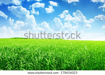 Summer landscape with field of green grass and blue sky with clouds. - stock photo