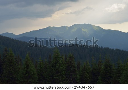 Summer landscape with fir forest in the mountains. Carpathians, Ukraine, Europe - stock photo