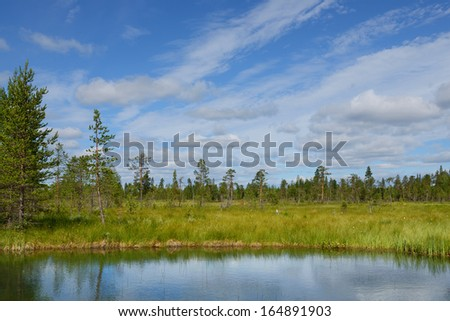 Summer landscape with forest, lake and swamp. Northern Finland, Lapland - stock photo