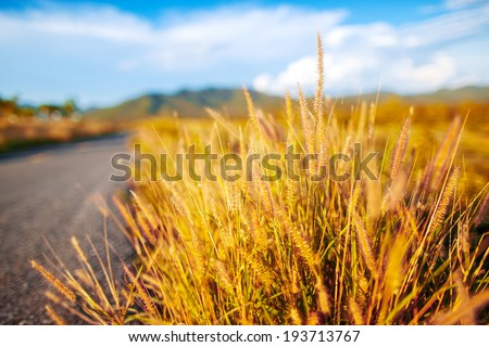 Summer landscape with grass flowers, road and dramatic sky - stock photo