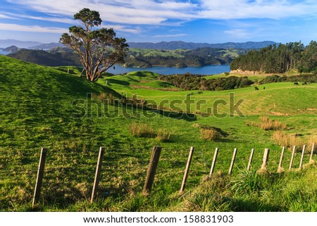 Summer Landscape with Green Field and Blue Sky, Coromandel Peninsula, North Island, New Zealand - stock photo