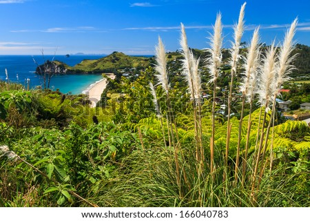 Summer Landscape with Green Field and Blue Sky on the Pacific Sea Coast, Coromandel Peninsula, North Island, New Zealand - stock photo