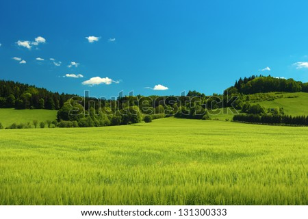 Summer landscape with green grass on a meadow and clear blue sky - stock photo