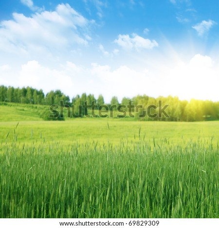 Summer landscape with green wheat ,blue sky and sun. - stock photo