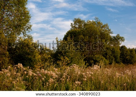 Summer landscape with meadow and green trees