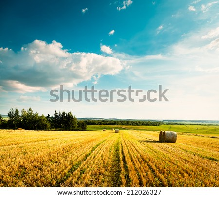 Summer Landscape with Mown Wheat Field on the Background of Beautiful Clouds. Agriculture Concept. Toned Photo. Copy Space. - stock photo