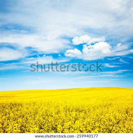 Summer Landscape with Rape Field on the Background of Beautiful Sky. Agriculture Concept. Copy Space. - stock photo