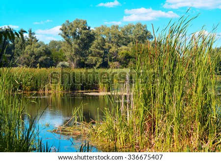 Summer landscape with reeds and forest on the lake against the blue sky - stock photo