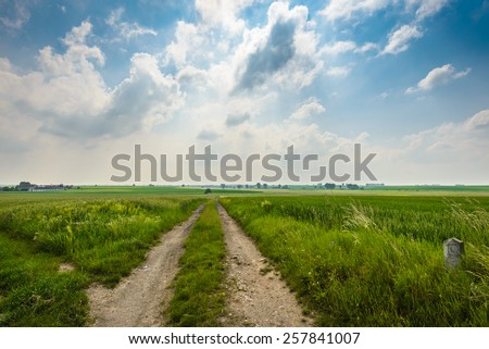 Summer landscape with road,green corn field and blue sky . - stock photo