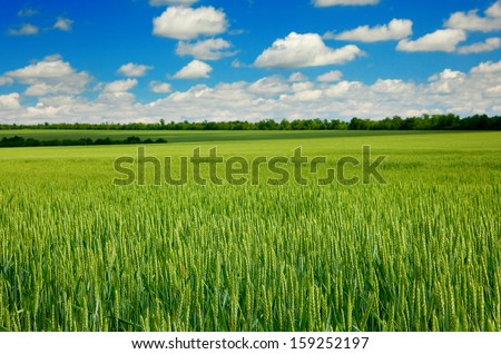 Summer landscape with sky and green herb - stock photo