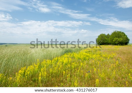 Summer Landscape with Wheat Field and Clouds. Wheat field and countryside scenery. Green wheat field. wheat fields. spring landscape with wheat field - stock photo
