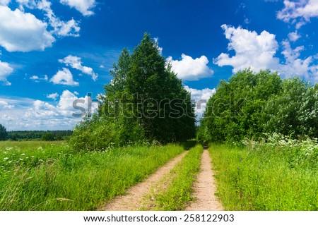 Summer Lawn Fields of Sunlight  - stock photo