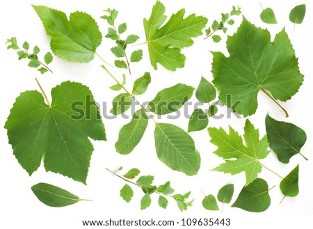 Summer leaves set isolated on white background - stock photo