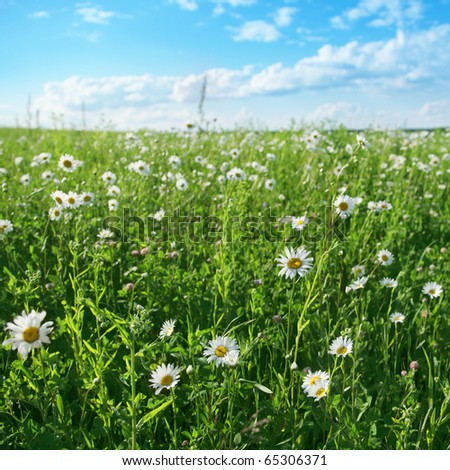 Summer meadow and blue sky with clouds. - stock photo