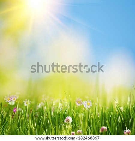 Summer meadow under bright yellow sun, natural backgrounds - stock photo