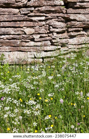 Summer meadow with blooming wild flowers - stock photo