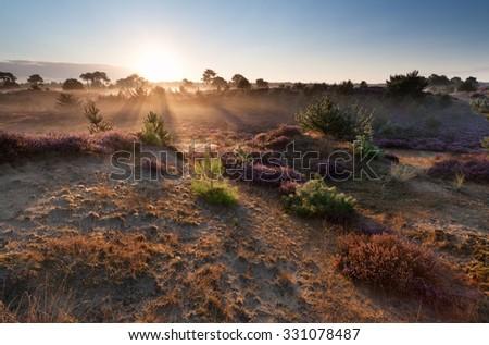 summer misty sunrise over sand dunes, Drenthe, Netherlands - stock photo