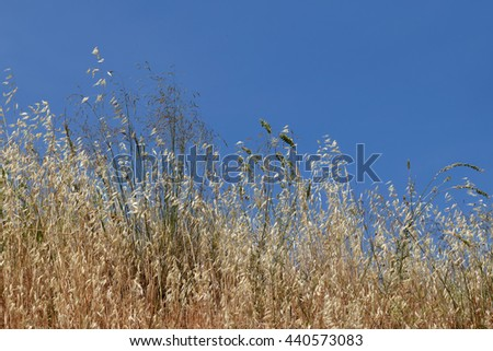Summer nature dry plants vegetation and blue sky. - stock photo