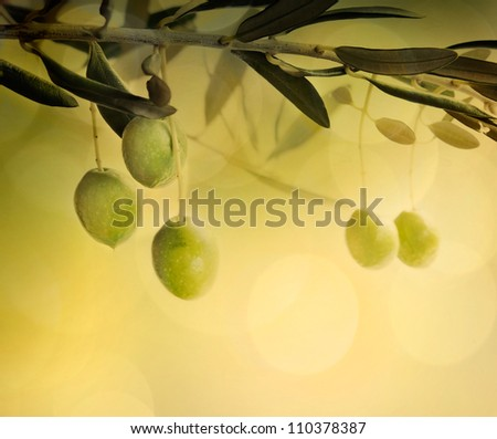 Summer olives design background with fresh olive branch and bokeh lights - stock photo