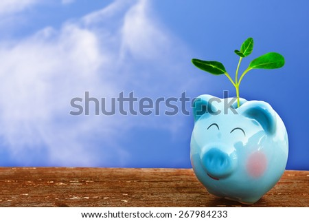 summer piggy bank with seedling on wooden floor over blue and cloudy sky background. - stock photo