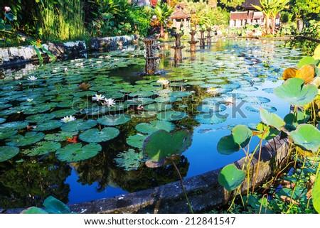 Summer pond - stock photo