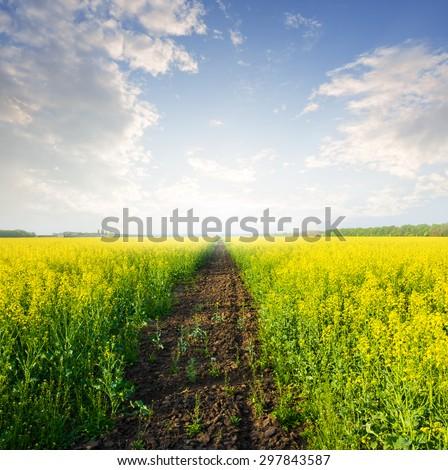 summer rape field scene - stock photo