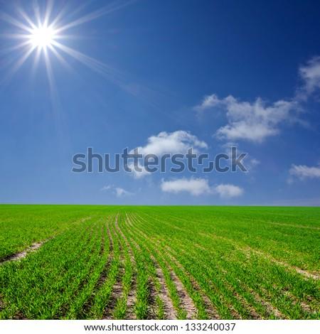 summer rural field - stock photo