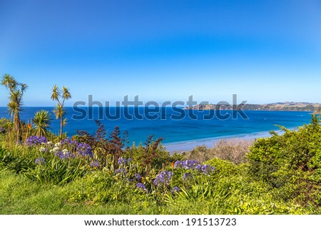Summer sea view from the green hill with flowers. Waiheke island, New Zealand - stock photo