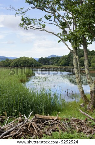 Summer sky reflected in the Lower Lake, (Lough Leane) Killarney, Ireland, with a native alder tree, a patch of water lilies in the morning sunshine and a glimpse of blue mountains in the distance - stock photo