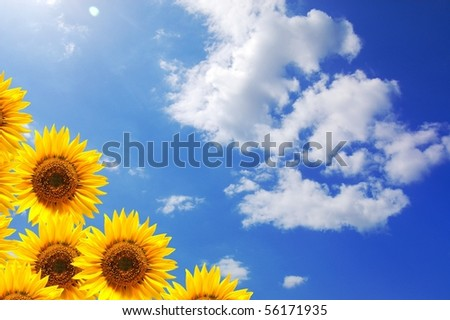 summer sun and copyspace on blue sky with flower - stock photo