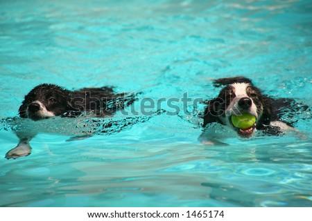Summer Swim - stock photo