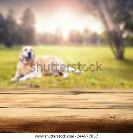 summer time in garden and dog  - stock photo