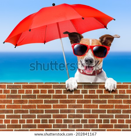 summer vacation dog behind stonewall with red umbrella - stock photo