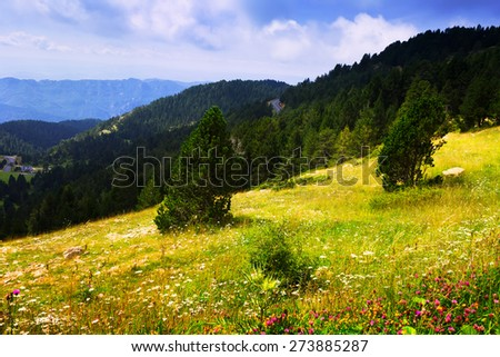 Summer view of highland meadow against forest. Pyrenees, Aragon    - stock photo