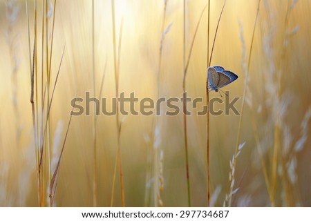 Summer view with Common Blue Butterfly - stock photo