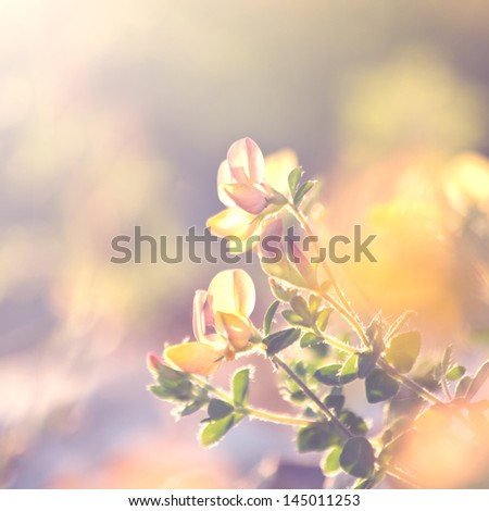 summer vintage beautiful flowers on sunrise - stock photo