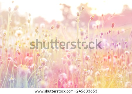 summer vintage beautiful flowers on sunrise made with color filters - stock photo