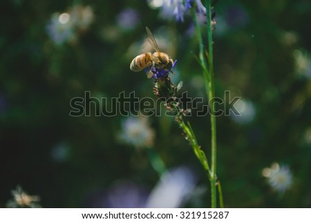 Summer vintage floral  background with bee and wild cornflowers - stock photo