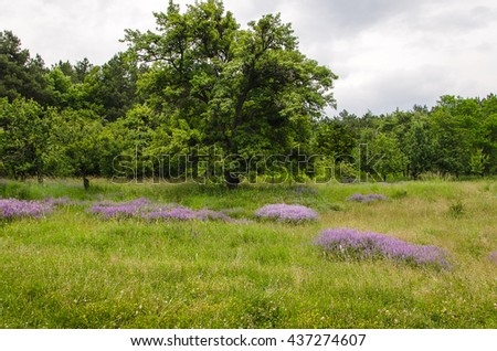 summer wildflower in green grass in forest - stock photo