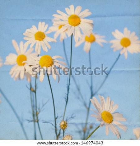 Summerly grunge background with chamomile  - stock photo