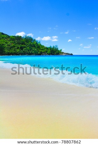 Summertime Tranquility Jungle - stock photo