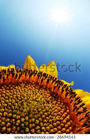 sun - stock photo