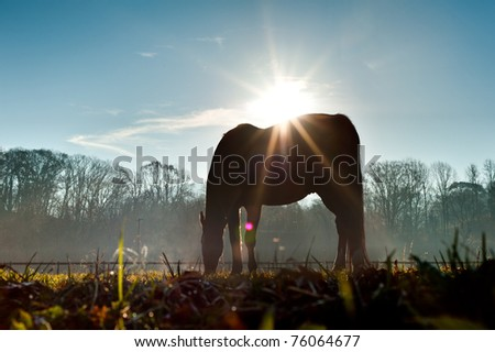 Sun above horse from low angle. - stock photo